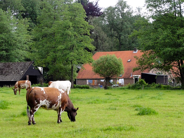 голландская ферма